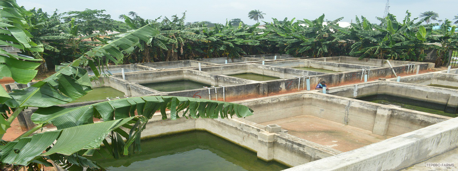 FISH GROW-OUT PONDS